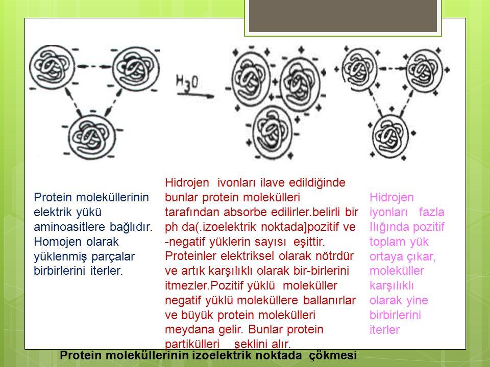 Hidrojen ivonları ilave edildiğinde bunlar protein molekülleri tarafından absorbe edilirler.belirli bir ph da(.izoelektrik noktada]pozitif ve -negatif yüklerin sayısı eşittir. Proteinler elektriksel olarak nötrdür ve artık karşılıklı olarak bir-birlerini itmezler.Pozitif yüklü moleküller negatif yüklü moleküllere ballanırlar ve büyük protein molekülleri meydana gelir. Bunlar protein partikülleri şeklini alır.